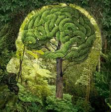 Beyin ormanı